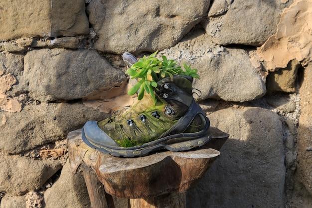 Горный ботинок с зелеными растениями. объекты и растения