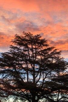 バックグラウンドで赤みがかった夜明けのバックライト付きツリー