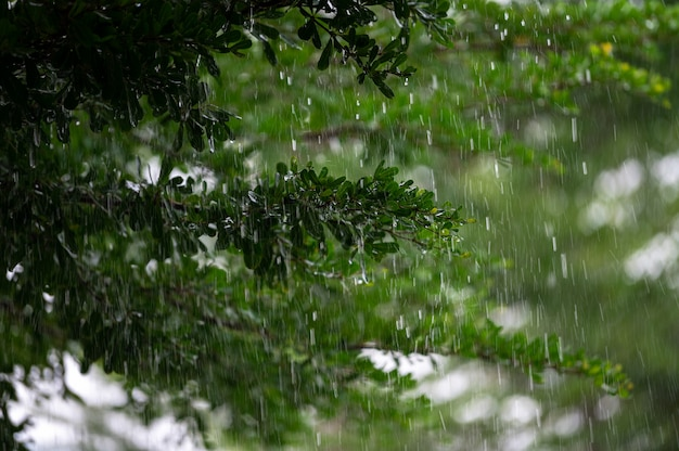 Капли дождя с фоном зеленых листьев