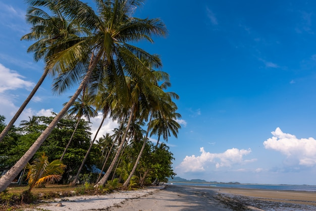 Песчаный пляж с кокосовыми пальмами с голубым небом