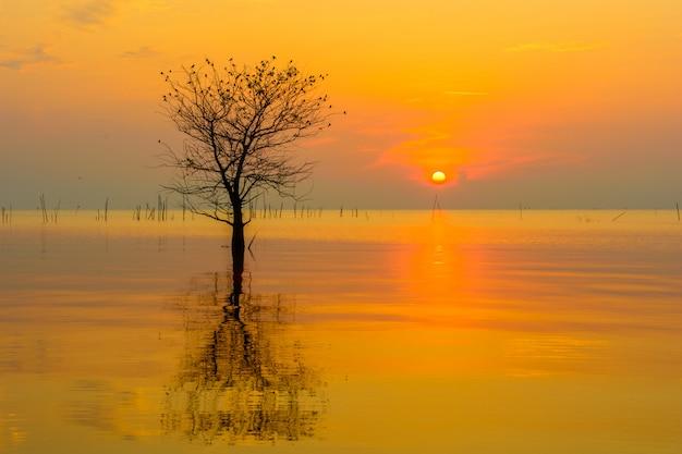 日の出の空に海の単一のマングローブツリー