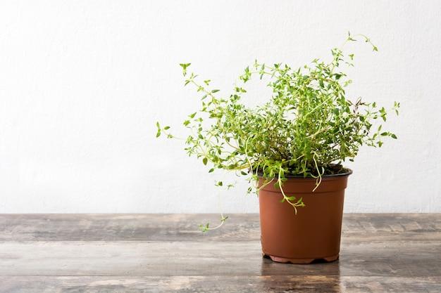 木製のテーブルにタイム植物が付いている鍋