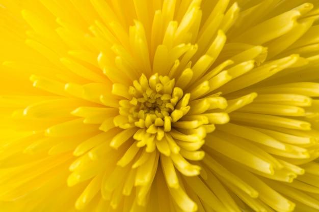 背景として黄色の花のクローズアップ
