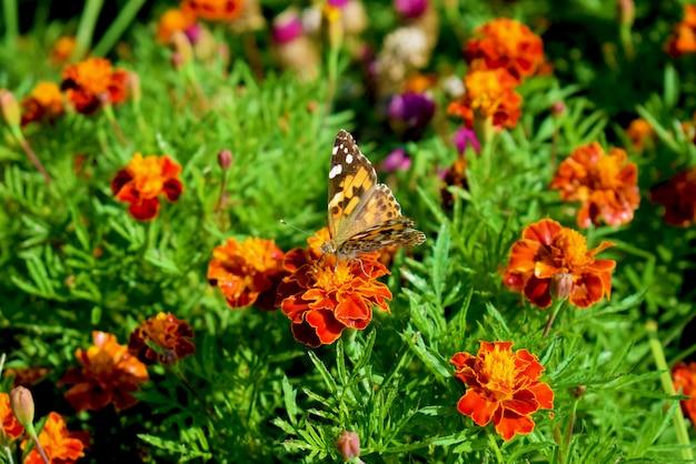 Бабочка в саду