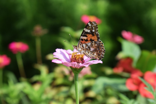 Цветок с бабочкой