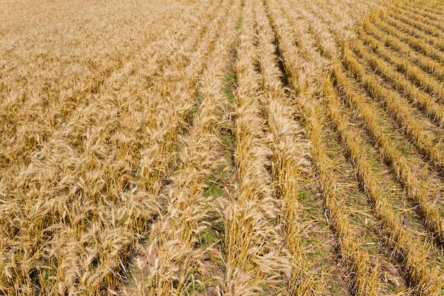 上から見た黄金の小麦農園