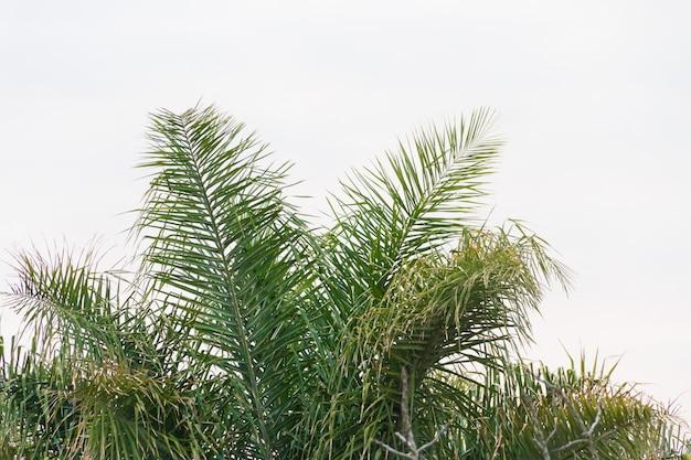 Зеленая чашка пальмы на белом фоне