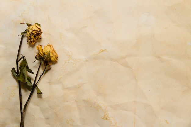 古紙にしおれた花で時間を過ごすの概念