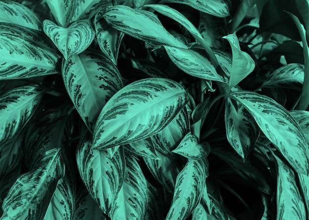 熱帯植物の緑の葉の背景。コンセプト。自然な自然な背景。コピースペース。ネオンミント調色