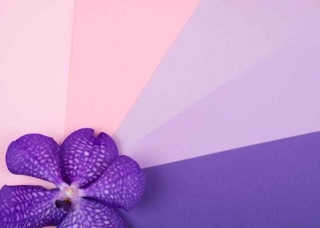 Фиолетовый цветок орхидеи на разноцветном фоне