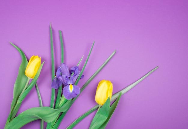 黄色のチューリップと紫色のアイリスの花