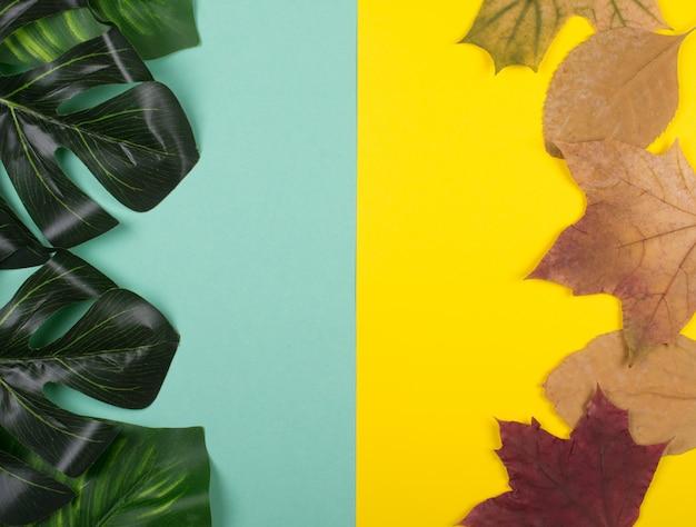 モンステラの葉と秋のカエデの葉