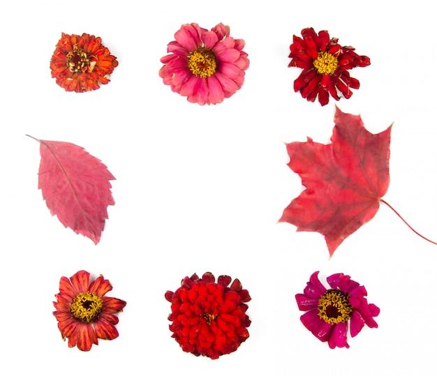 秋の花と葉