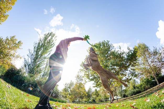 公園で犬と遊ぶ女性