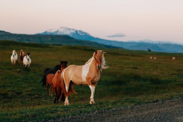 フィールド、農場の動物、自然シリーズの馬