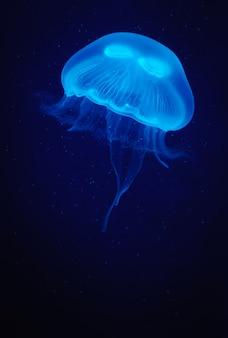 暗い水の上の青い光のクラゲ