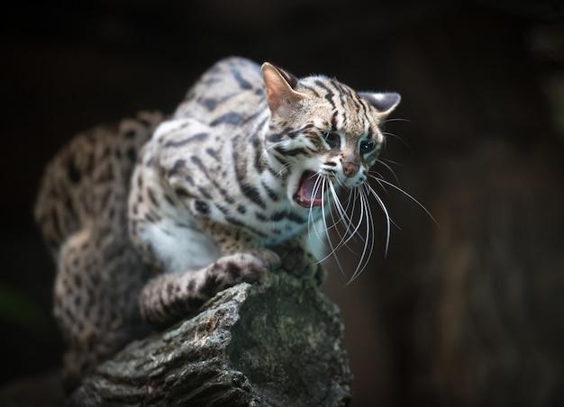 Злой леопардовый кот говорит мяу