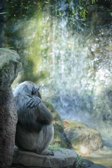 チンパンジーは滝の前で休んでいます