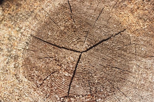 Крупным планом одного круглого нарезанного дерева журнала
