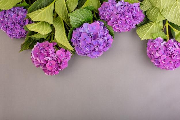 灰色の壁に新鮮な紫のアジサイ。テキスト用の空き容量。上面図。コピースペース