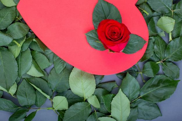 休日の背景、バレンタインの日。緑の葉、コピー領域の背景に赤いバラで飾られた赤いハートの形をしたボックス
