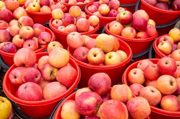 バケツに明るい色のリンゴ