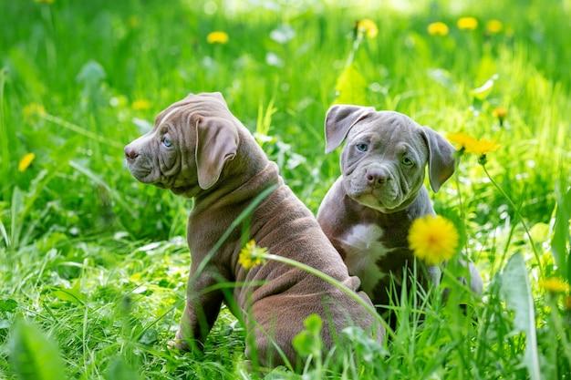 Милые маленькие собаки, сидя среди желтых цветов в зеленой траве в парке