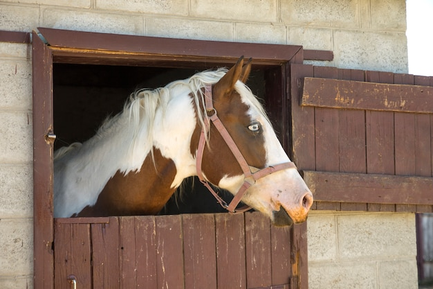 Лошадь в сарае