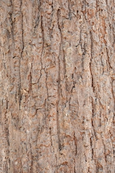 木のひびの入った樹皮