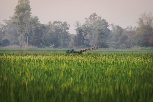 田んぼの風景は、シェルター、機械、稲の緑で構成されています。