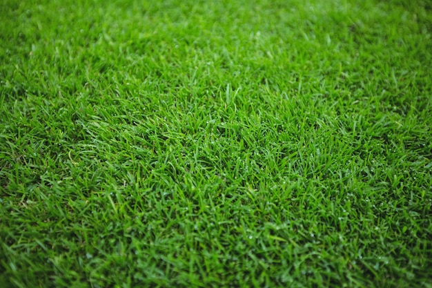 緑の芝生のフィールドの背景