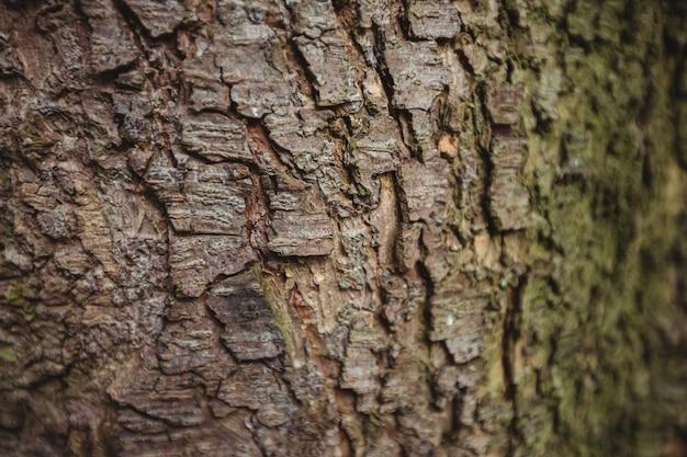 古い木の樹皮の背景
