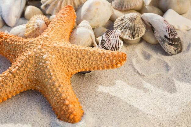 Крупным планом галька, морские звезды и различные морские раковины на песке