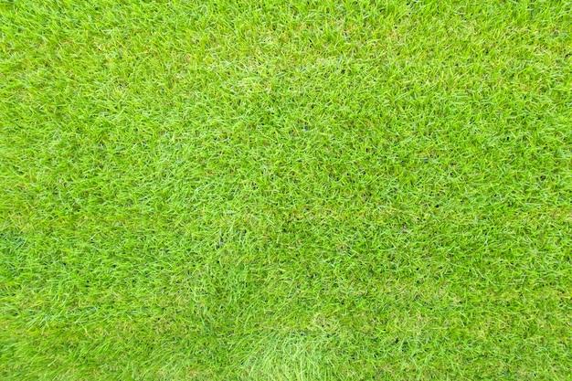 緑色の草の背景テクスチャのトップビュー。