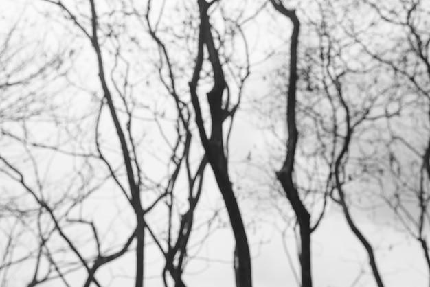 Лесные бледные ветви роста темно