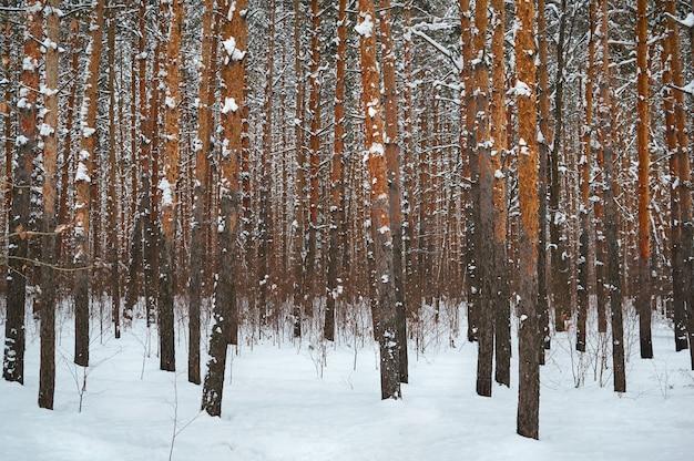 雪に覆われた森の木