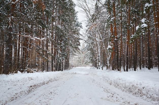 雪に覆われた森と冬の道
