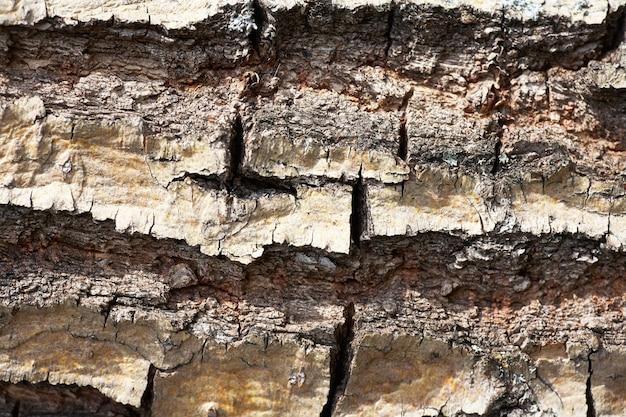 古い木の樹皮の木のテクスチャ