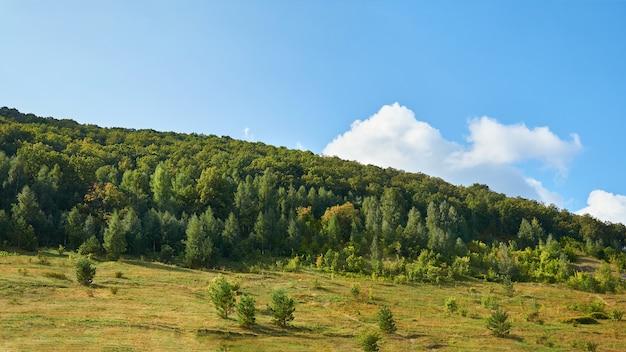 森と青い空と山。森林保全地域。