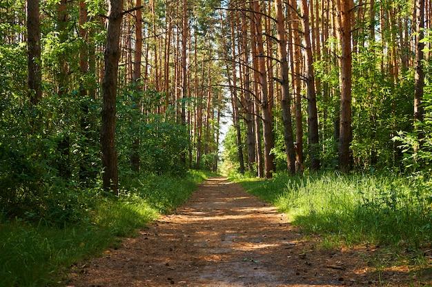 Тропинка для людей в зеленом лесу.