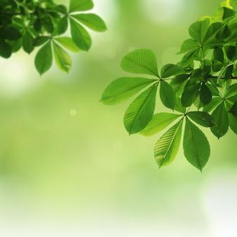 緑の自然な背景、緑の背景
