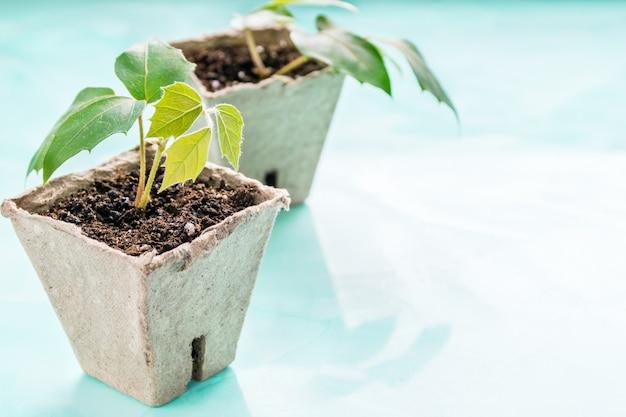 Растения в торф горшок на бирюзовом фоне. земной день