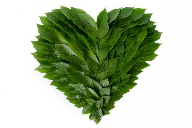 緑の葉の中心。自然への愛と環境保護の概念