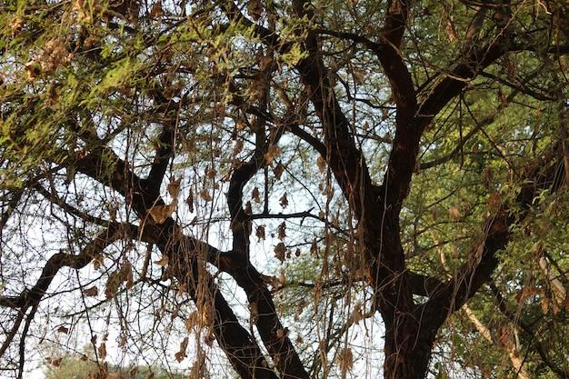 Дерево видно из выше