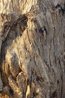 Деревянный ствол крупным планом