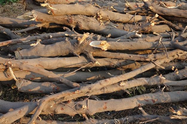 Свежесрезанных бревен древесины на полу