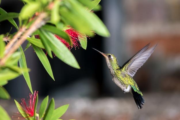 Колибри на цветке
