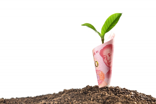 ビジネス、節約、成長、白で隔離される経済のために成長している植物と中国人民元紙幣の画像