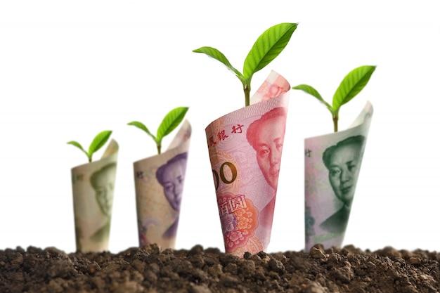 銀行券の画像は、ビジネス、保存、成長、白で隔離される経済のための土壌の植物の周りにロールバック