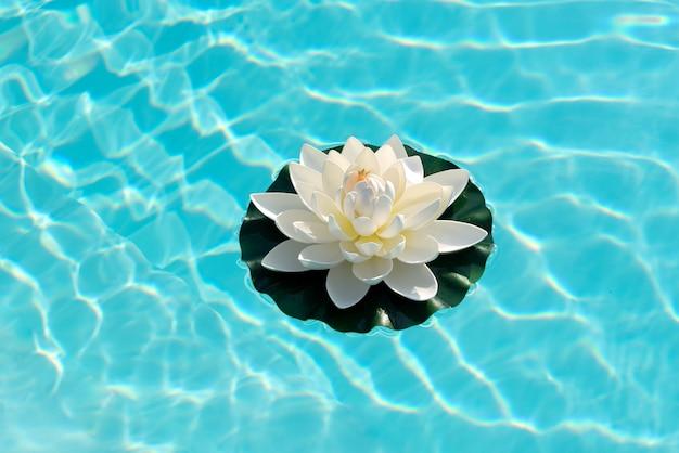 輝く太陽に照らされた水に浮かぶ睡蓮